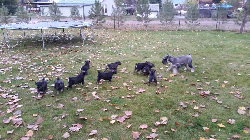 I Have Five Dogs Can I Afford A Yard